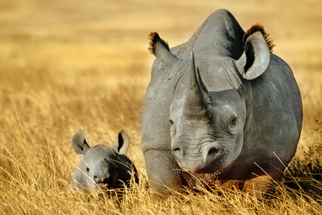 Rhino conservation Africa