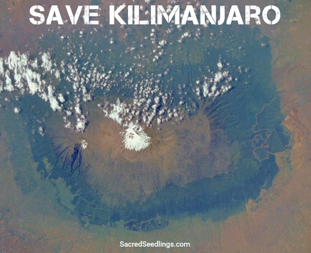 Mt. Kilimanjaro deforestation