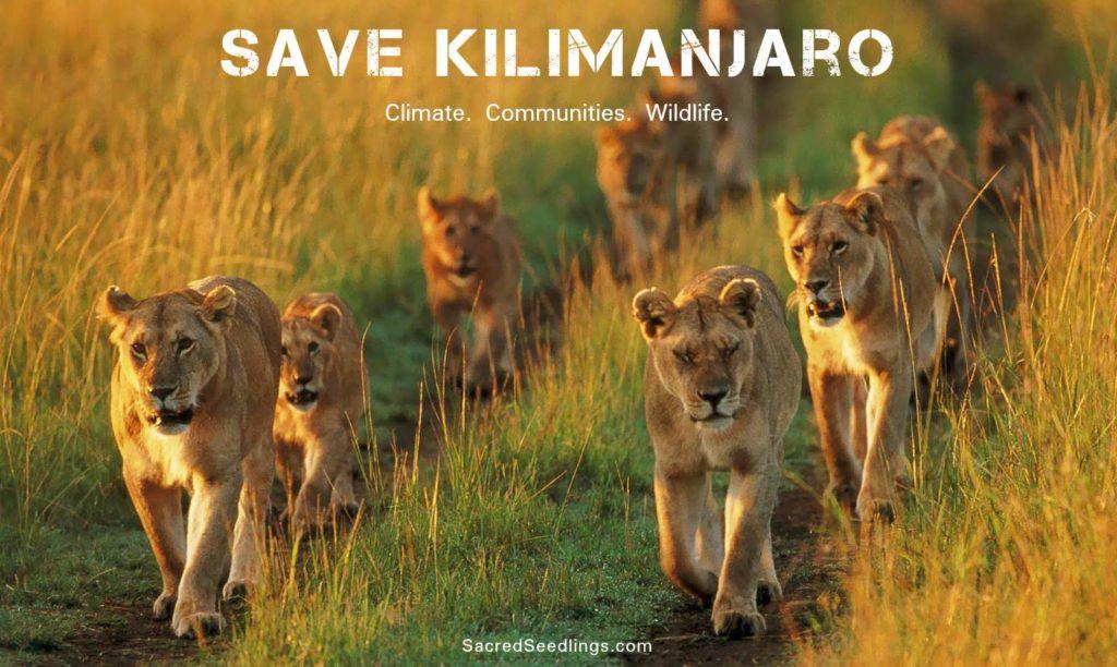 endangered species Africa