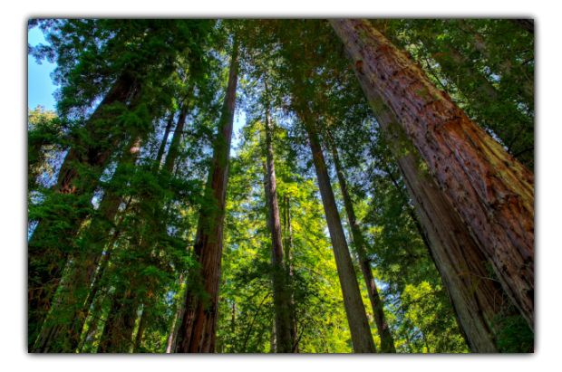 trees and carbon capture