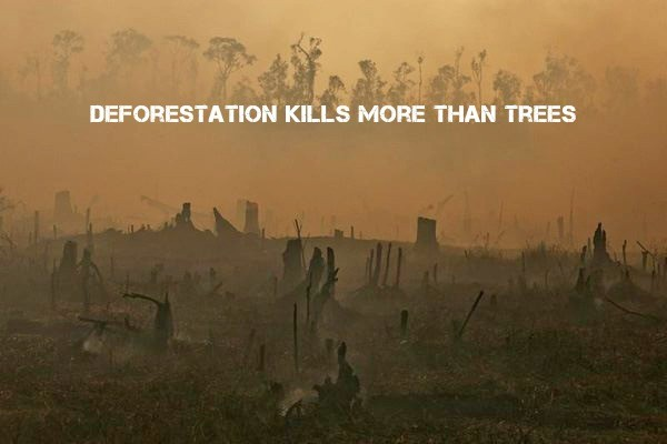 Palm Oil Fuels Global Warming