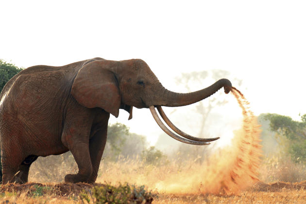 elephant conservation best practices