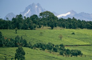 Mt. Kenya and climate change