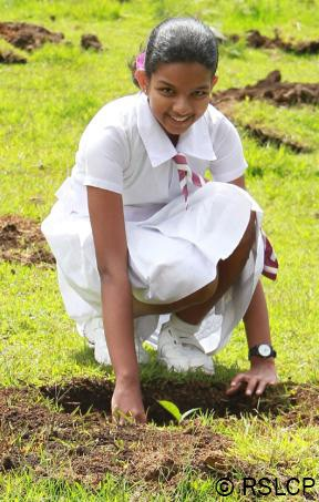 Sri Lanka Reforestation