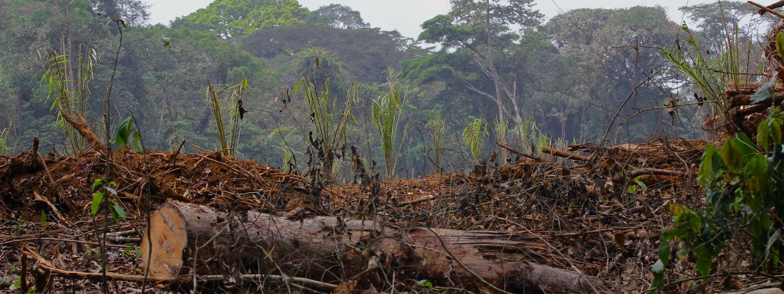 West Africa deforestation