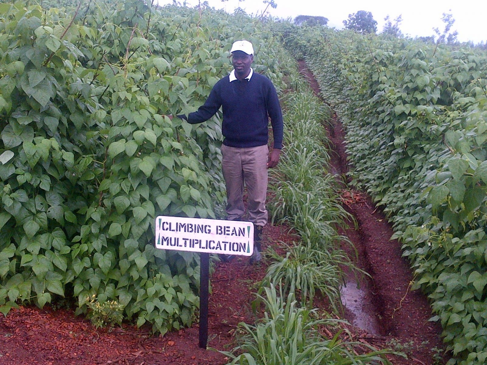 sustainable agriculture Uganda
