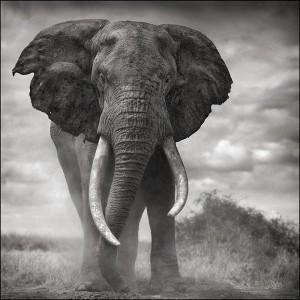 endangered species East Africa
