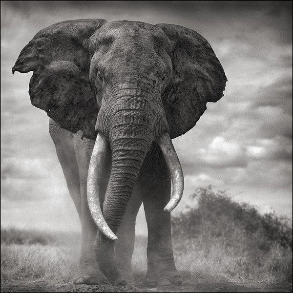 elephant conservation plan Tanzania