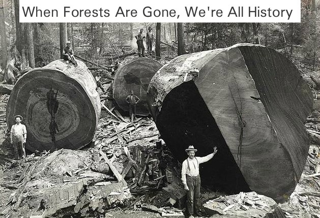 deforestation and forest conservation