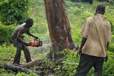Nigeria Deforestation
