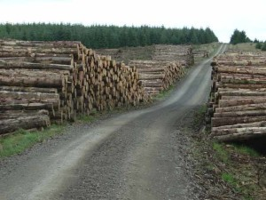 illegal logging Romania
