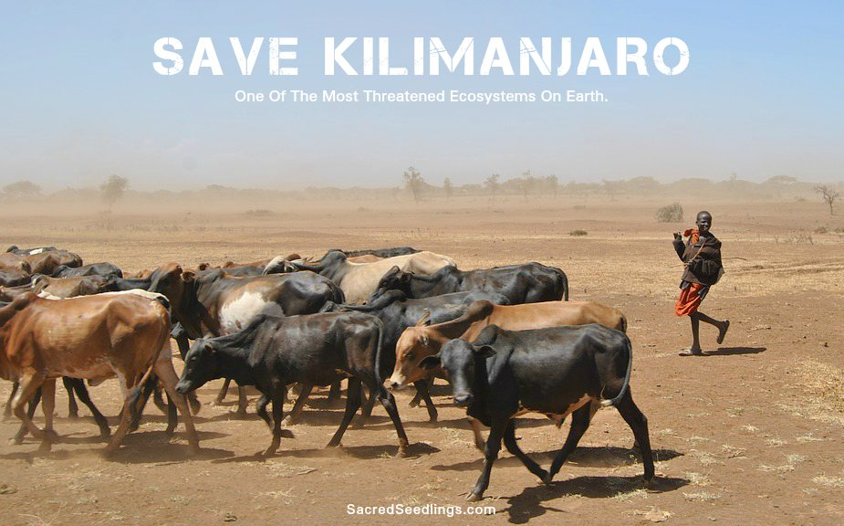 Africa drought and wildlife conservation