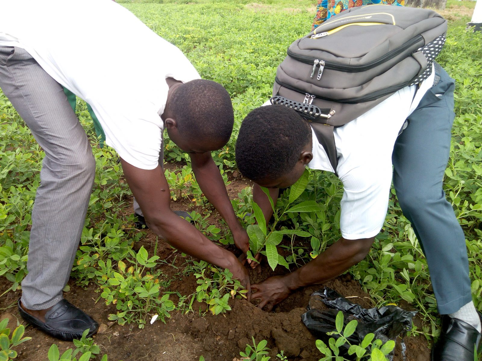 Sierra Leone reforestation