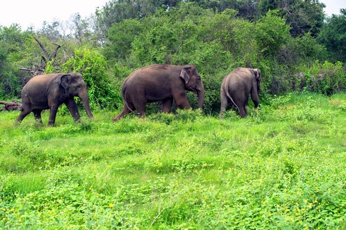 Reforestation Revives Wildlife Sanctuary