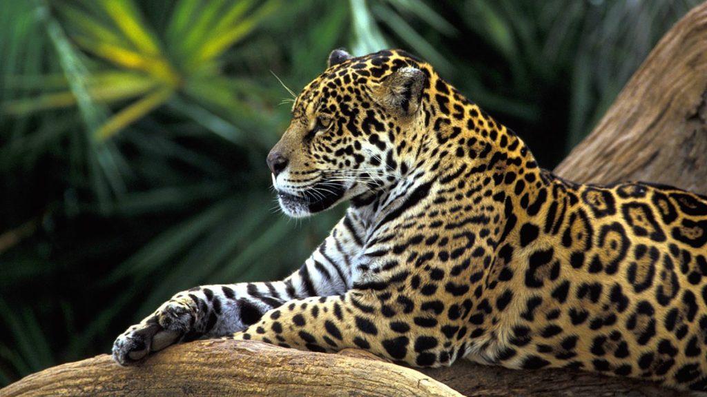 biodiversity and deforestation