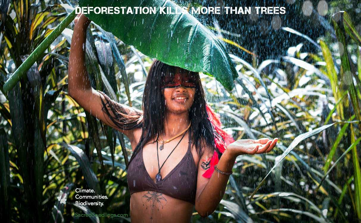 Deforestation Emits Tons Of Carbon